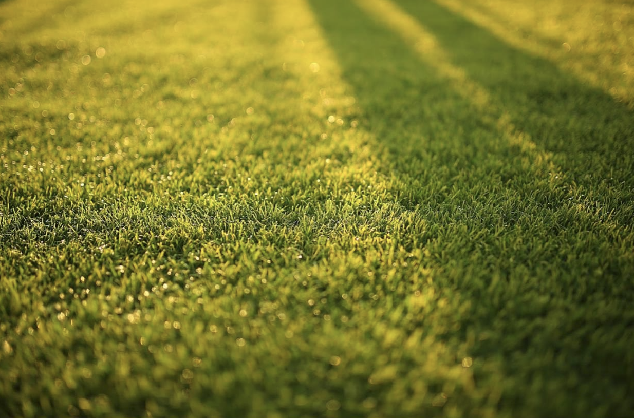 Find out why now is the time to switch to artificial turf for your San Diego front or backyard.